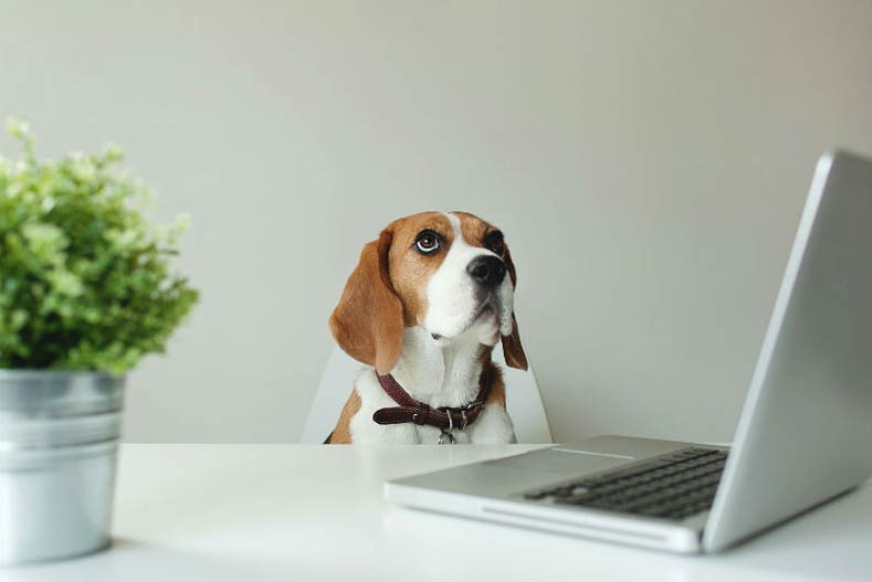 How to Write a Killer Pet Resume (Because Now Landlords Want to See