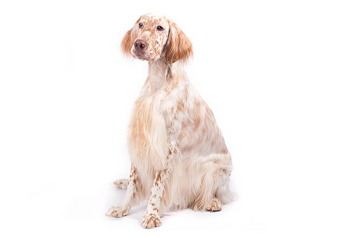 Awesome Beagle Growth Chart  Shih Tzu Names