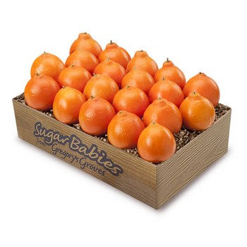 Sugar Baby Honeybell Oranges Tangelos Florida