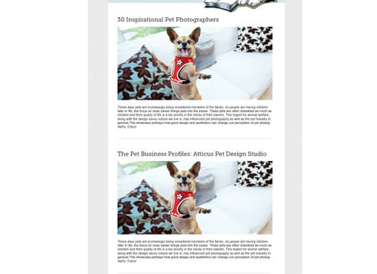 7 Steps To Create a Newsletter Design + Free Newsletter Templates