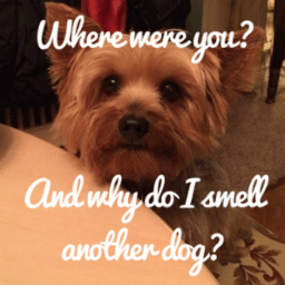 Where were you? And why do you smell like another dog?