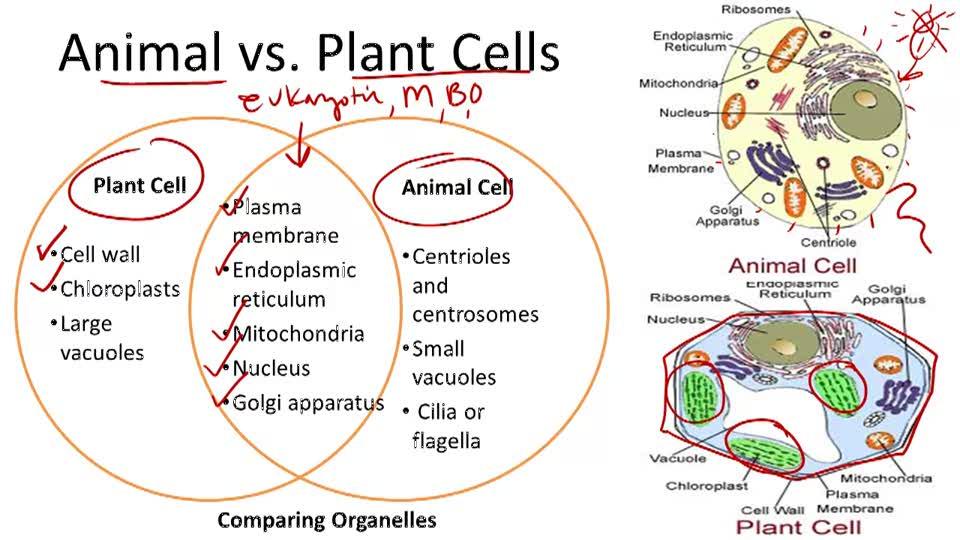 prokaryotic cell and eukaryotic cell venn diagram