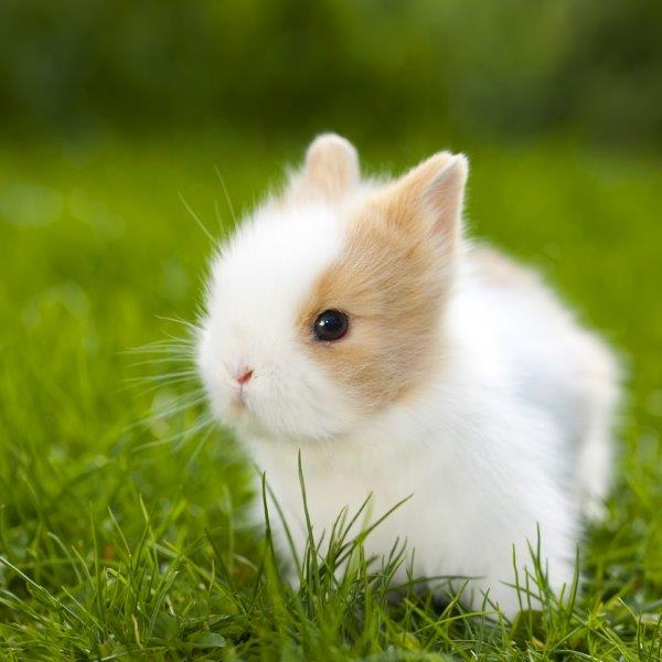 Cute Sleeping Babies Wallpapers Cute Baby Rabbits 27 Pics That Will Melt Your Heart