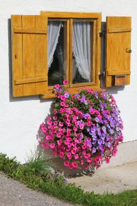 40 Window and Balcony Flower Box Ideas (PHOTOS)