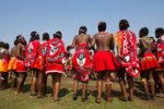 Zulu And Swazi Virgin Girls Dance For Their King
