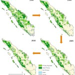 Rainforests decline sharply in Sumatra, but rate of deforestation slows