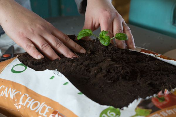 Create an Easy Organic Garden in Under 10 Minutes via oreeko.com