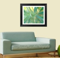 Framed Fine Art Abstract Nature Photography | Turquoise ...