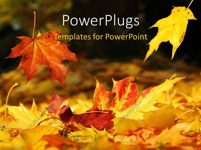 PowerPoint Template a number of leaves in the fall season (2408)