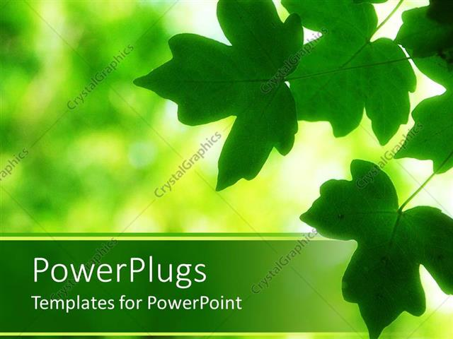 PowerPoint Template serene scene with green leaves on the edge with