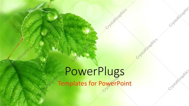 PowerPoint Template a lot of leaves with blurr background (27228)