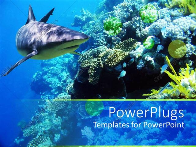 PowerPoint Template Underwater coral reef ocean with shark and