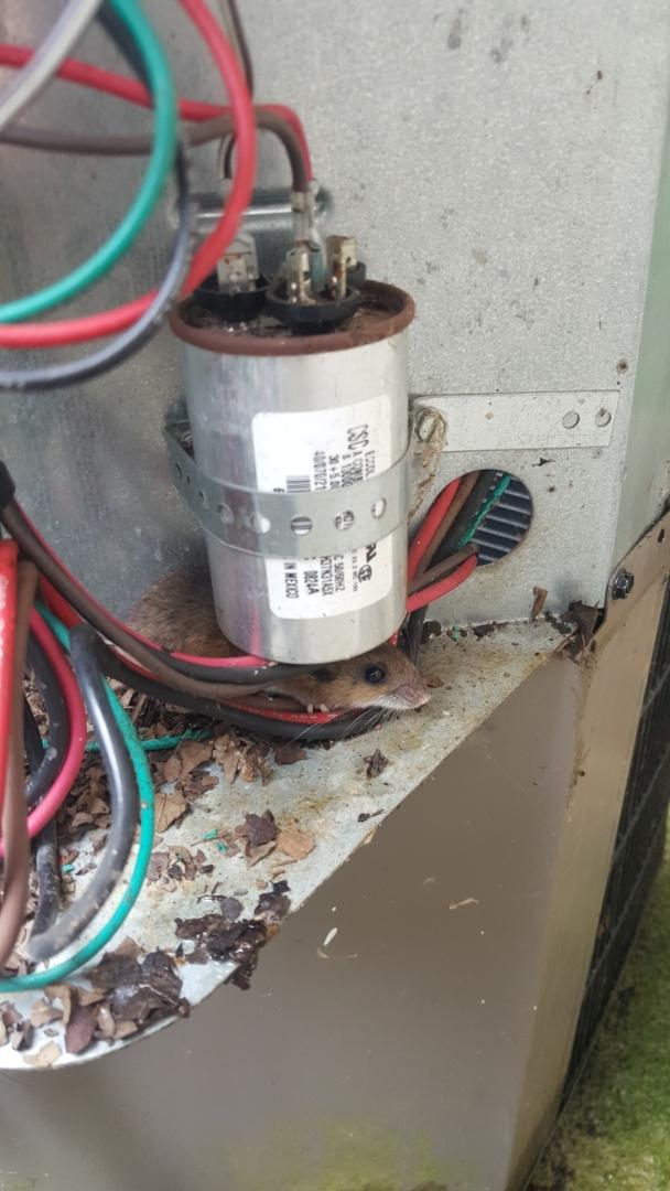 AC, Boiler, and Furnace Repair in Winnebago, IL
