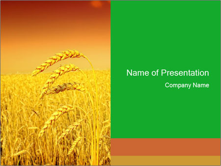 Ukrainian Wheat Field PowerPoint Template, Backgrounds  Google - wheat template