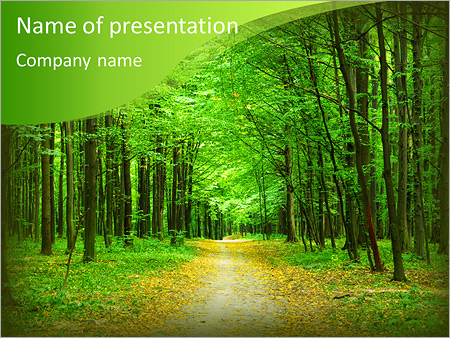 Beautiful green forest in summer PowerPoint Template  Backgrounds