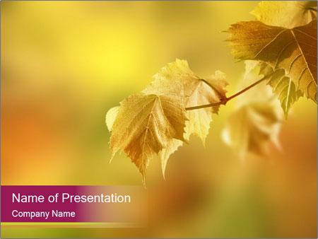Autumn - PowerPoint Template - SmileTemplates
