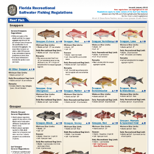 Saltwater fish limits saltwater fish bag size limits for Fishing license florida