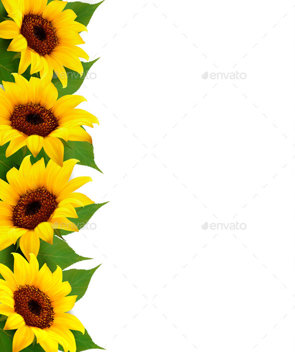 Fall Leaves Wallpaper Border Sunflowers Background With Sunflower And Leaves By Almoond
