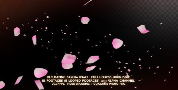 10 Floating Sakura Petals by Chatchawan VideoHive