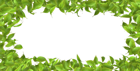 Green Leaves Frame by AS_100 VideoHive - green photo frame