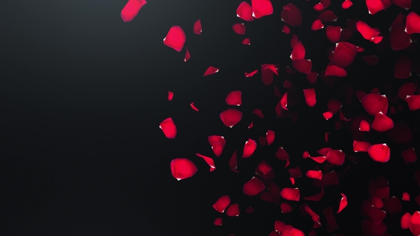 Flying Petals of Roses with on an Black Background by studiodav