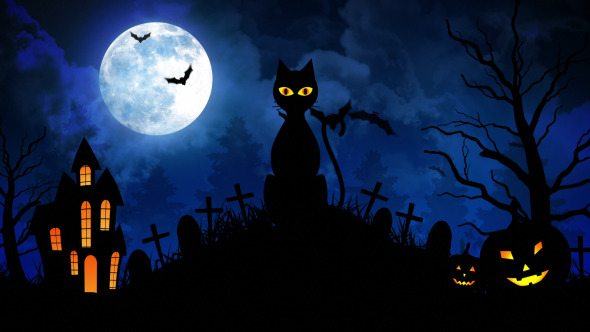 Descendants Of The Sun Hd Wallpaper Halloween Scary Cat Ii By Fxboxx Videohive