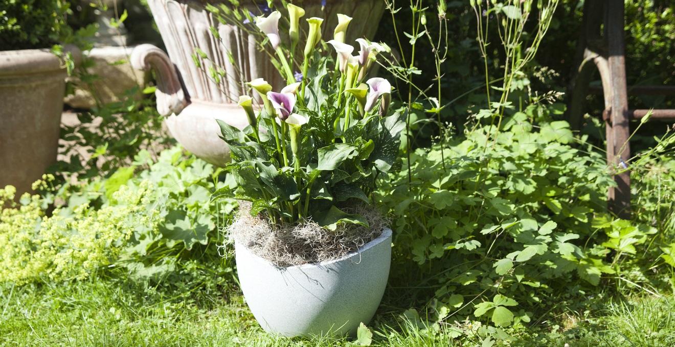 Decorazione Vasi Da Giardino : Vasi decorativi da giardino fonte del casale