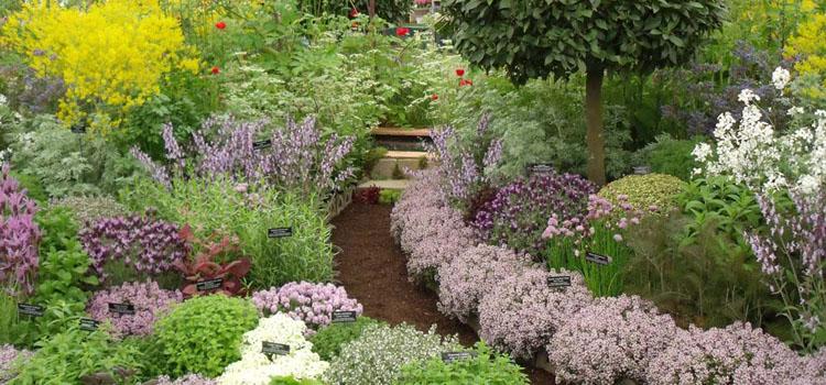 Planning a New Herb Garden - Part 1