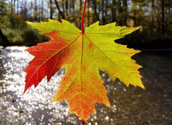 Cute Fall Wallpaper Iphone Colorful Leaf Google Search Image 2077080 By Maria D