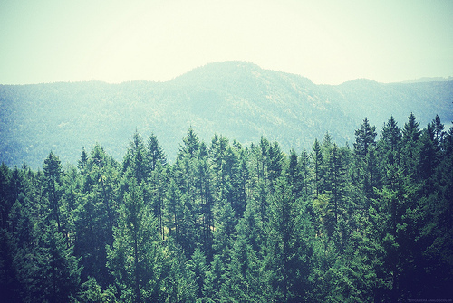 Kiss X Sis Iphone Wallpaper Film Forest Grain Indie Landscape Image 400229 On
