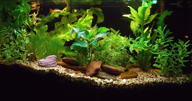 Freshwater, Saltwater, Reef, or Live Plant Tank, Which Aquarium is for