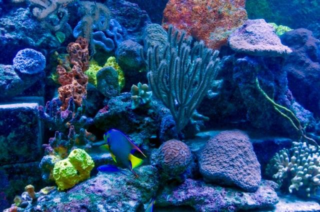 Freshwater fish tank maintenance reef 2017 fish tank for Live saltwater fish
