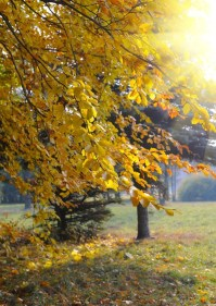 Autumn landscape Wall Mural  Pixers  We live to change
