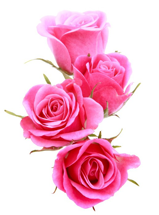 Auchan Salon Pink Rose Flower Bouquet Isolated On White Background