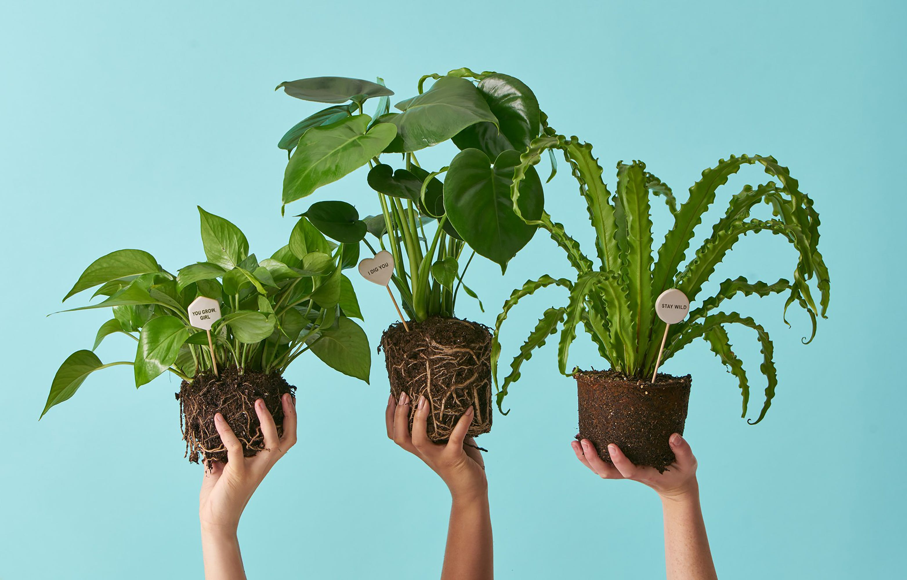 Unusual House Plants For Sale Buying Plants Online Plant Stores To Order Houseplants