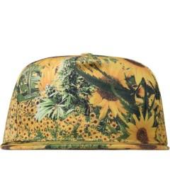 P.A.M. Helianthus P.A.M. Hat Picutre