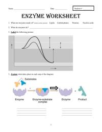 Enzyme Worksheet. Worksheets. Whenjewswerefunny Free ...