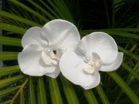WHITE ORCHID HAIR Flower, Silk Flower, Wedding Hair Clip ...