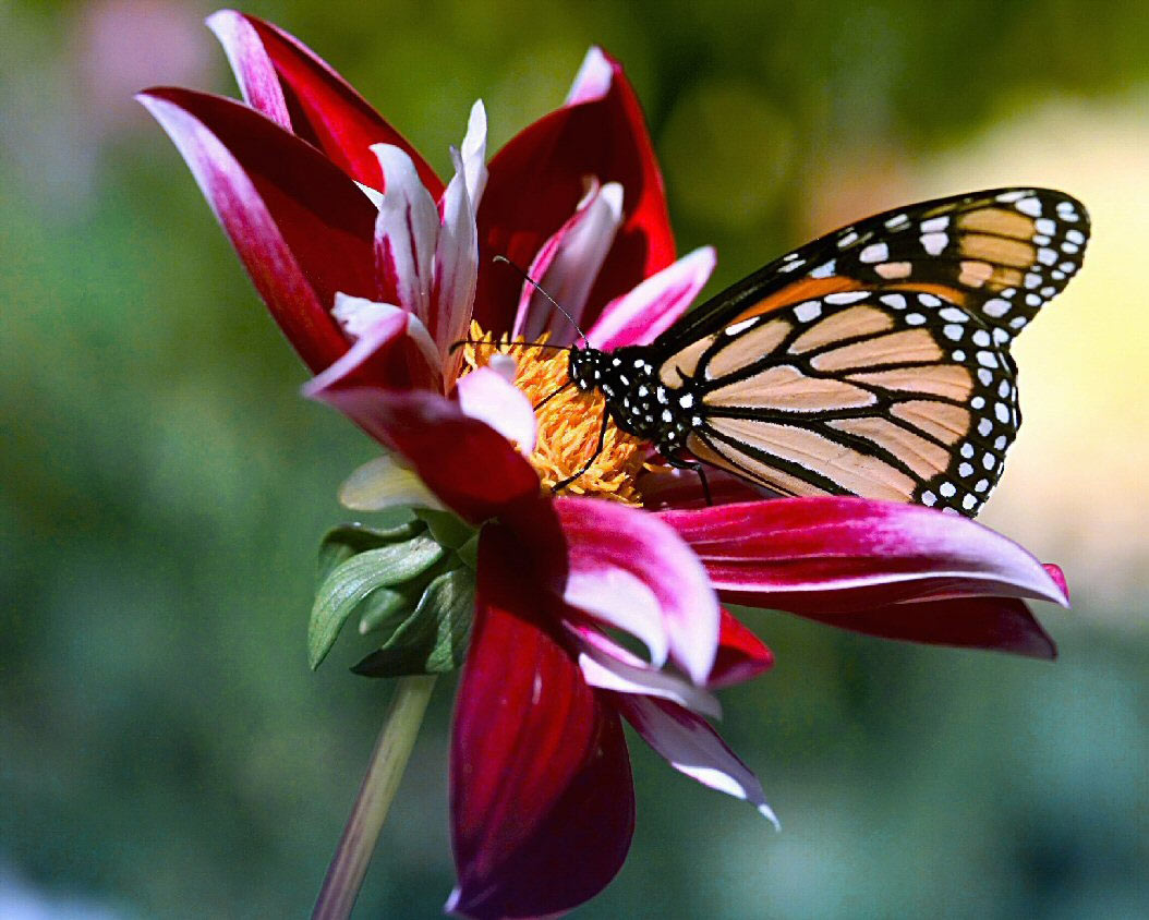 Beautiful Pictures Of Flowers Beautiful Flowers And Butterfly Wallpaper Jefferson County