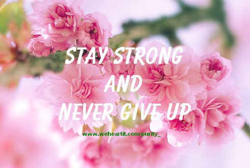 Iphone Wallpaper Quote Pink Flowers Never Give Up Quote Strength Text Image
