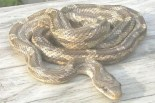 Texas Snakes That Look Like Copperheads