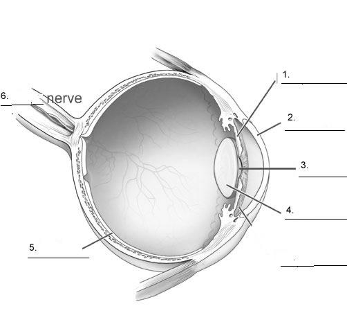 Eye Diagram Quizzes Wiring Diagram