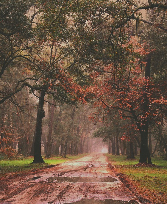 Pretty Fall Wallpapers Aesthetic Alone Alternative Autumn Background Image