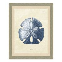 Framed Gicle Blue Sand Dollar Print Wall Art - Bed Bath ...