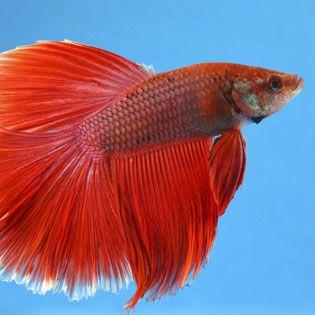Iphone 5 Fish Wallpaper Aquarium Fish Food Amp Nutrition Petsmart