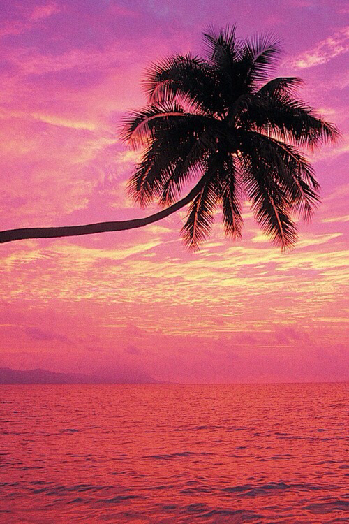 Cute Girl And Boy Hug Wallpaper Palm Palm Trees Pink Summer Trees Wallpaper Palm