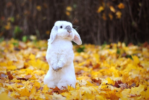 Fall Leaf Iphone Wallpaper Autumn Bunnies Bunny Cute Rabbit Image 3669368 By