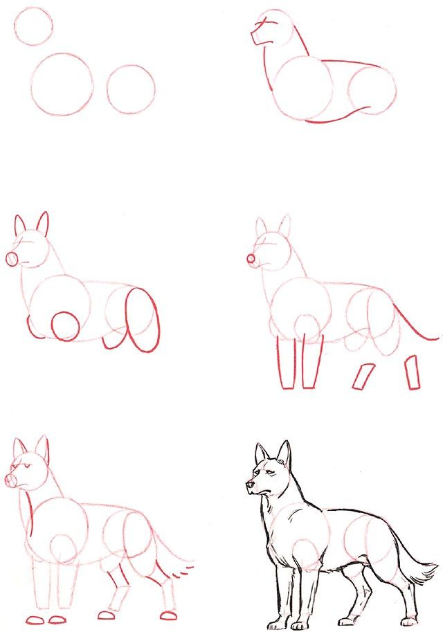 Best 25+ Draw animals ideas on Pinterest How to draw animals - line paper