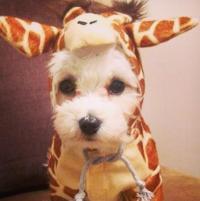 Giraffe Costume Dog