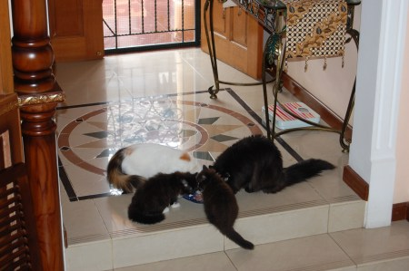 Kucing Jadi Pipis Sembarangan